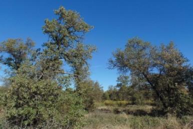 35 acres in Jones County