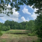 20 acres in Lamar County