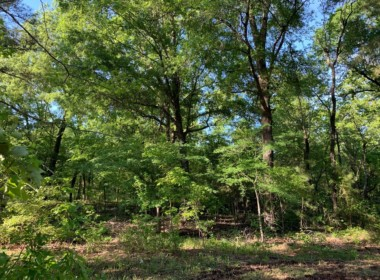 8 acres in Cass County