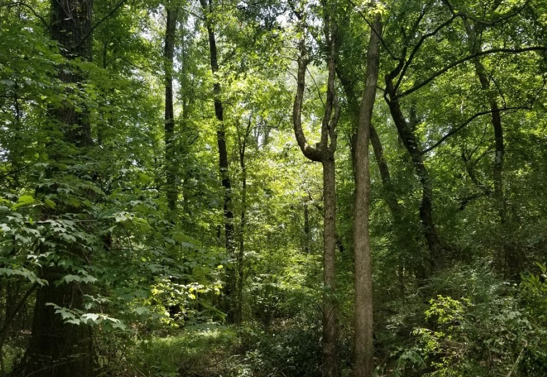 2 acres in Bowie County