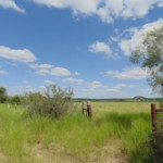 106 acres in Coleman County