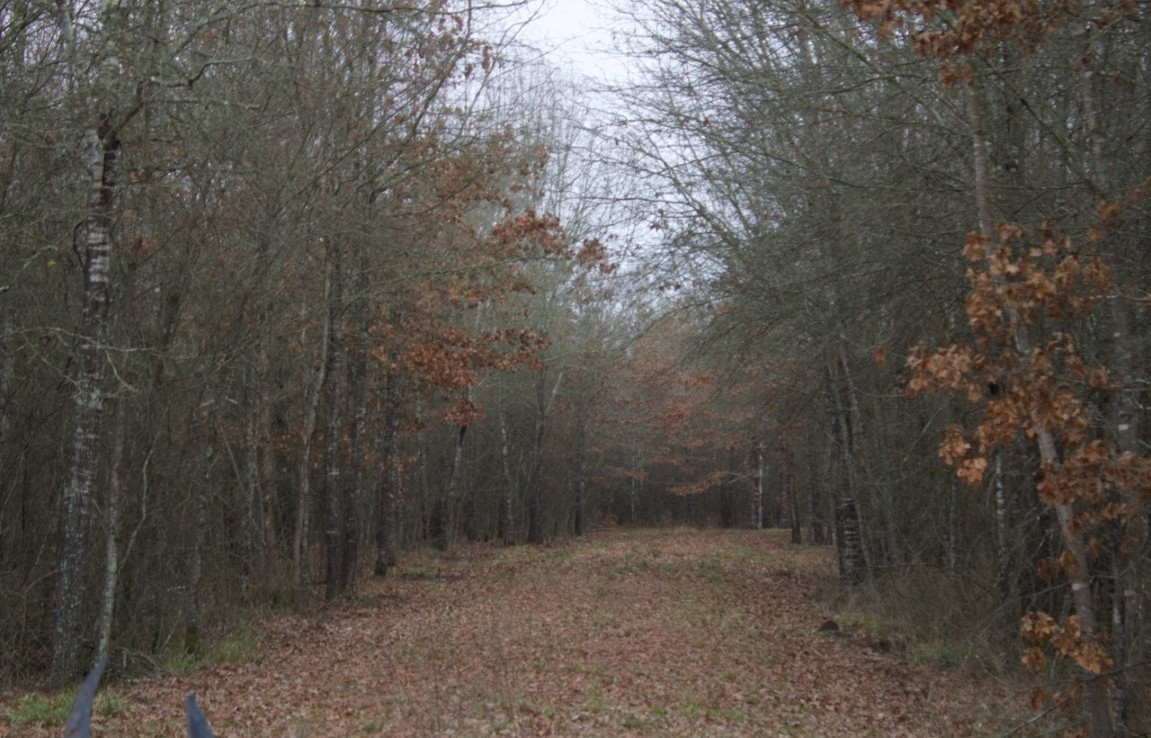 60 acres in Red River County