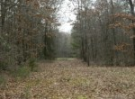 125 acres in Titus County
