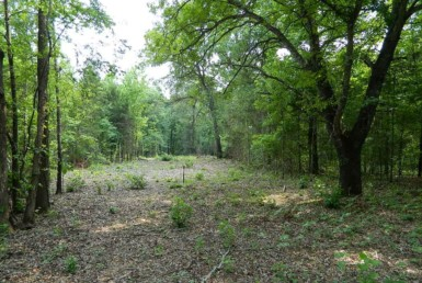 49 acres in Titus County