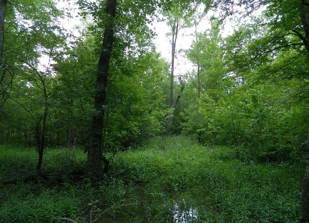 62 acres in Red River County