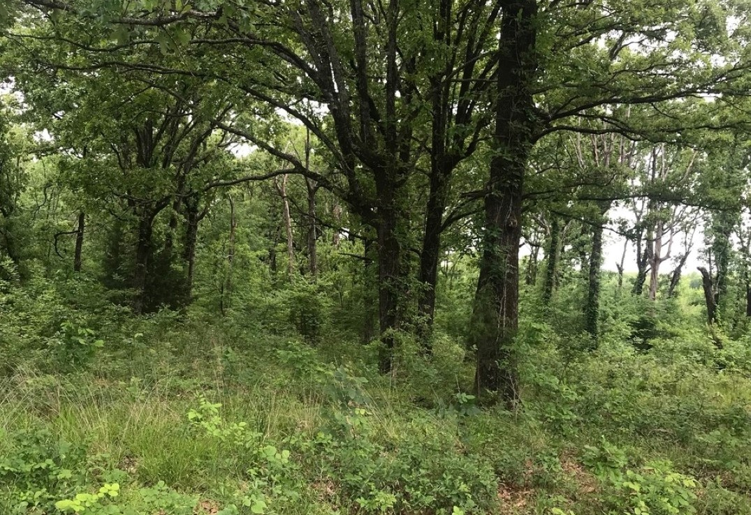 673 acres in Red River County