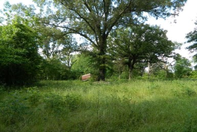 11 acres in Bowie County