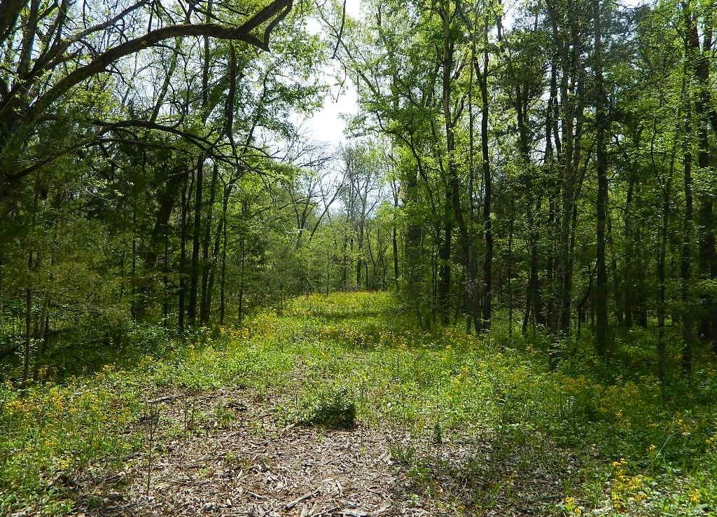 12 acres in Lamar County