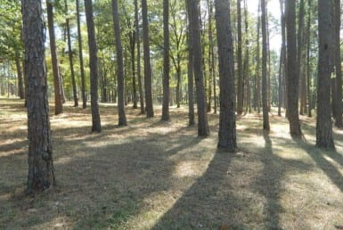 124 acres in Upshur County