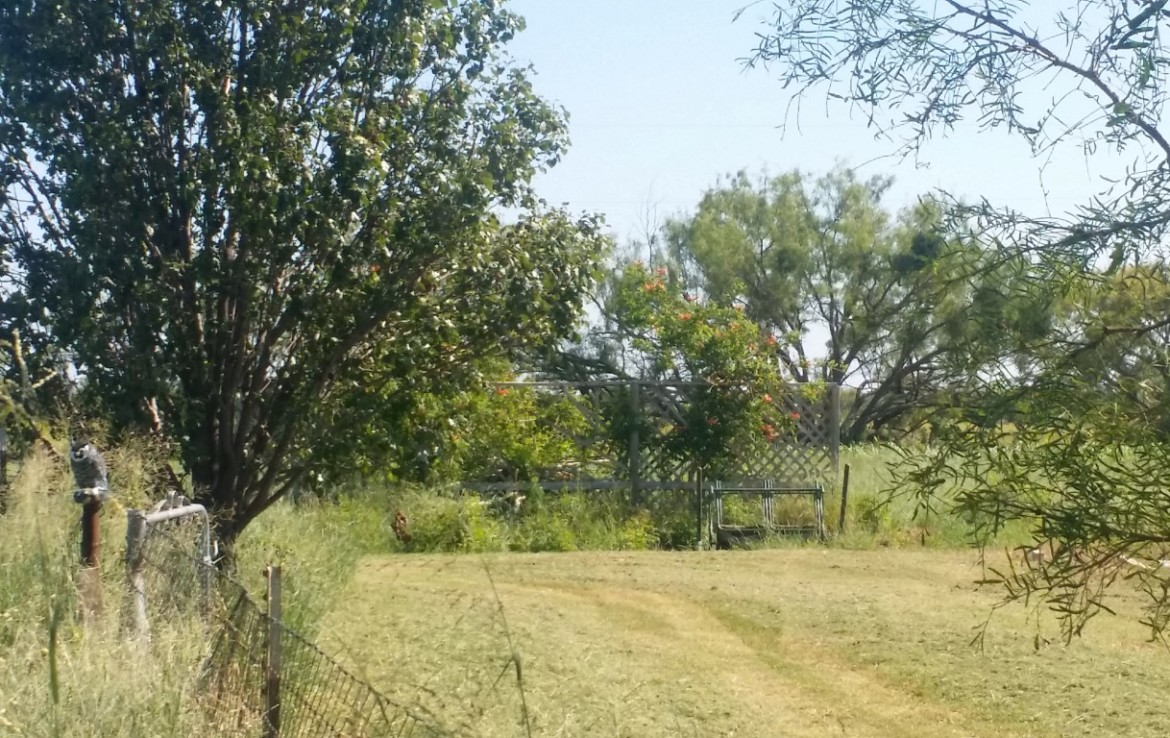 13 acres in Callahan County
