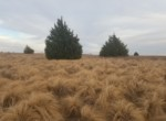 104 acres in Wilbarger County