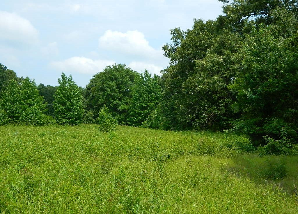 22 acres in Titus County