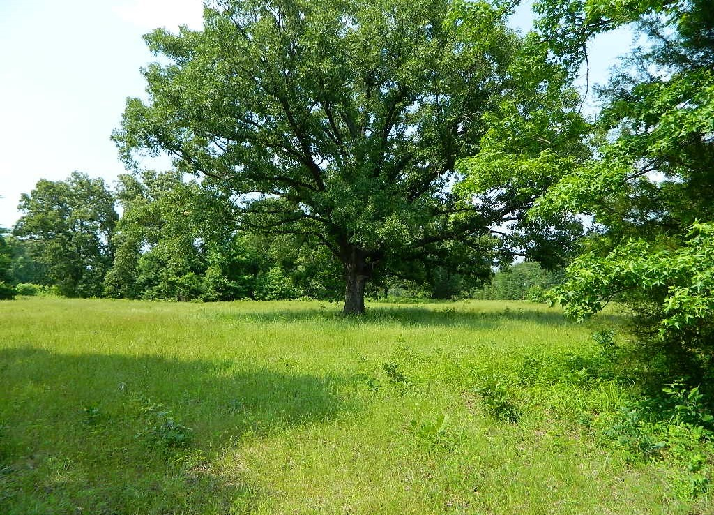 26 acres in Titus County