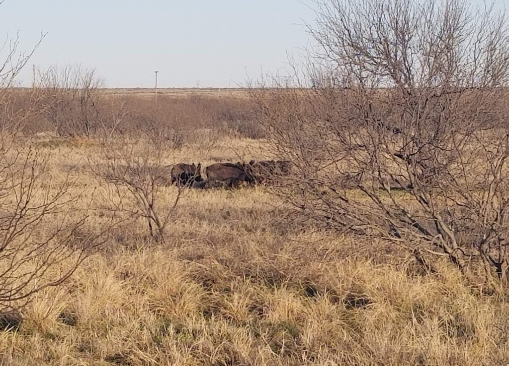 2,479 acres in Wichita County