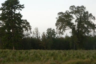 103 acres in Bowie County