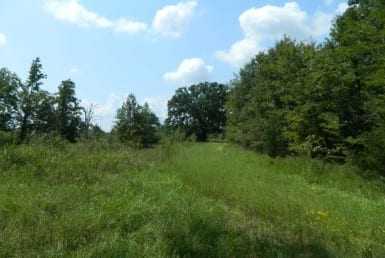 134 acres in Titus County