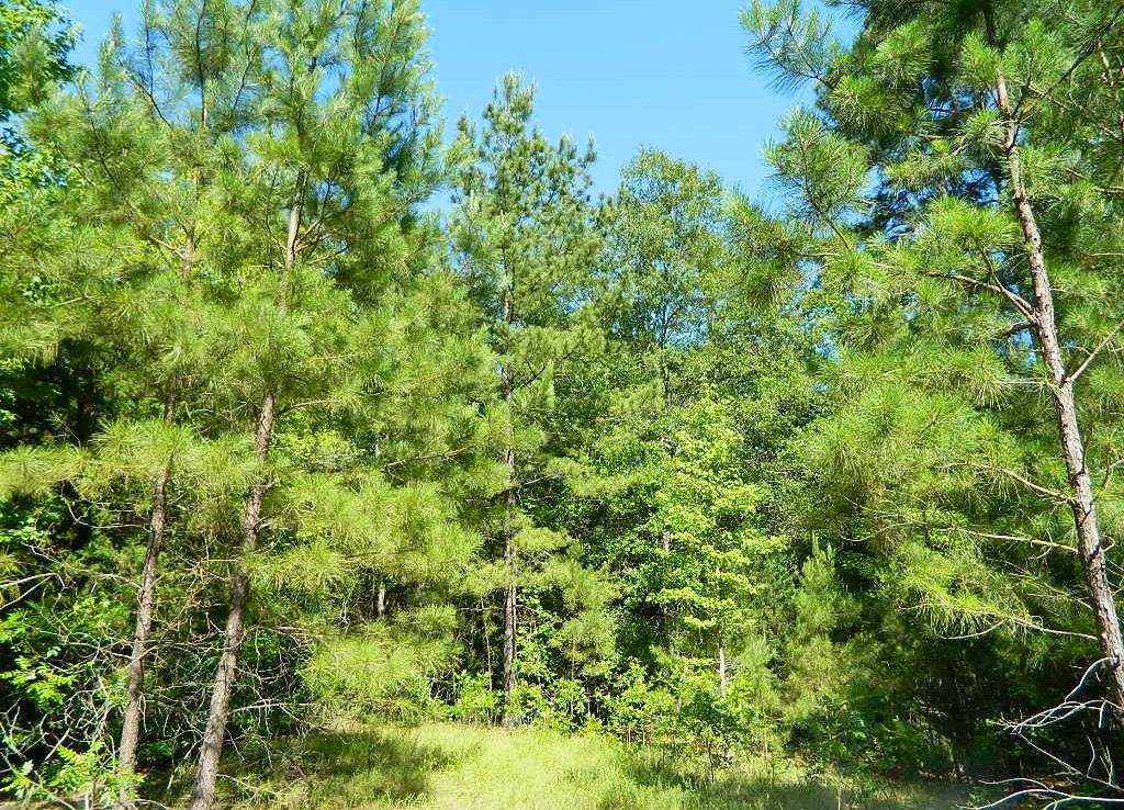 126.55 acres in Wood County