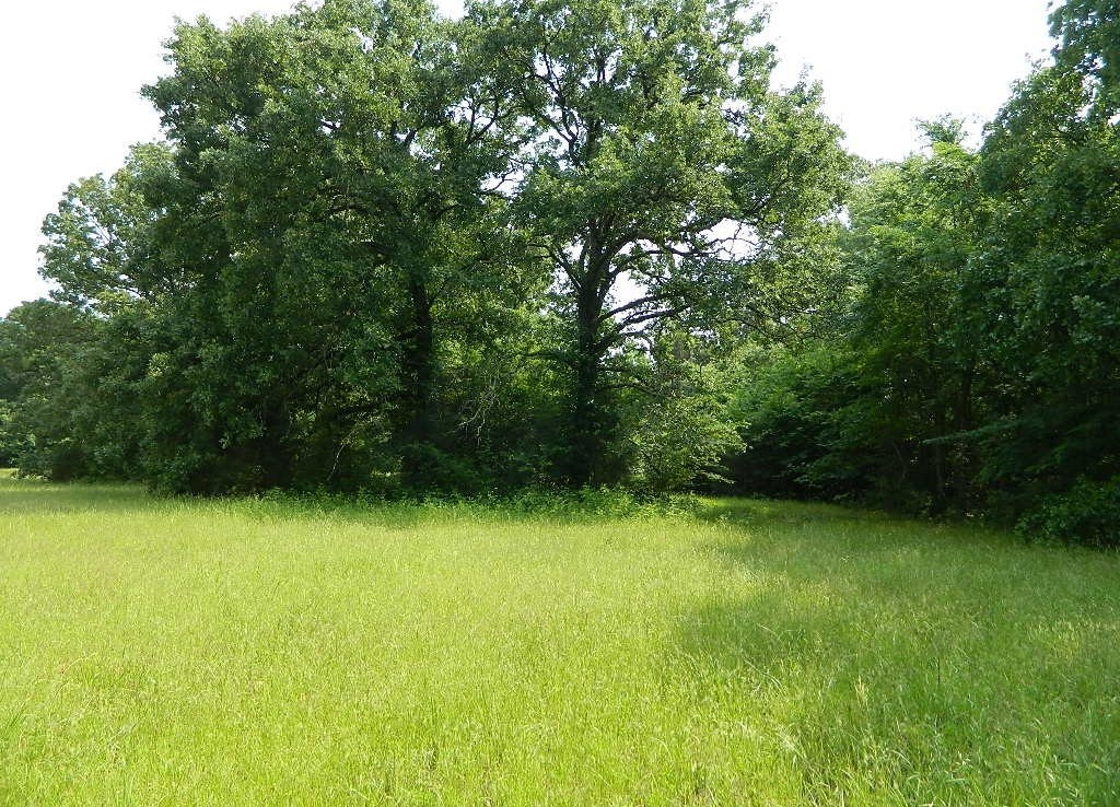 9 acres in Titus County