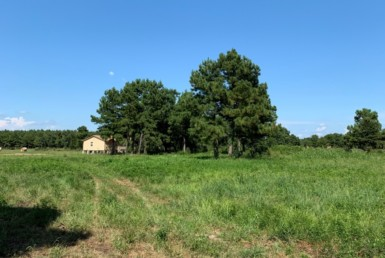40 acres in Red River County