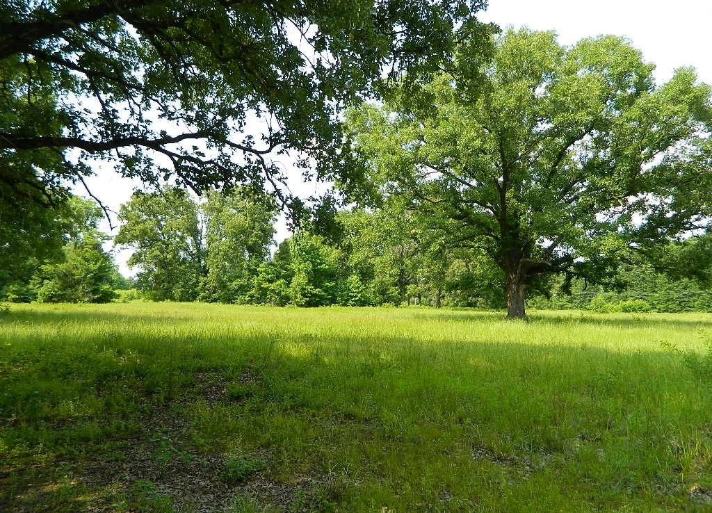 13 acres in Titus County