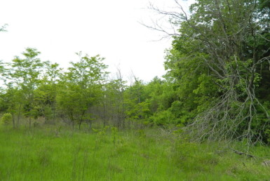 25 acres Red River County