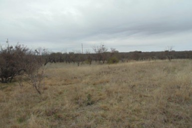 1.68 acres in Coleman County