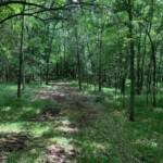 17 acres in Lamar County