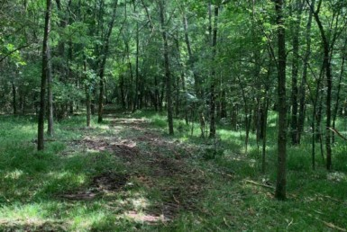 17 acres in Lamar County
