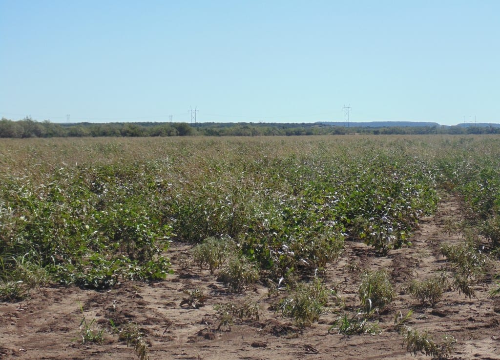 96 acres in Taylor County