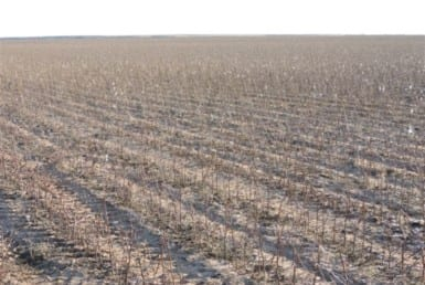100 acres in Wilbarger County