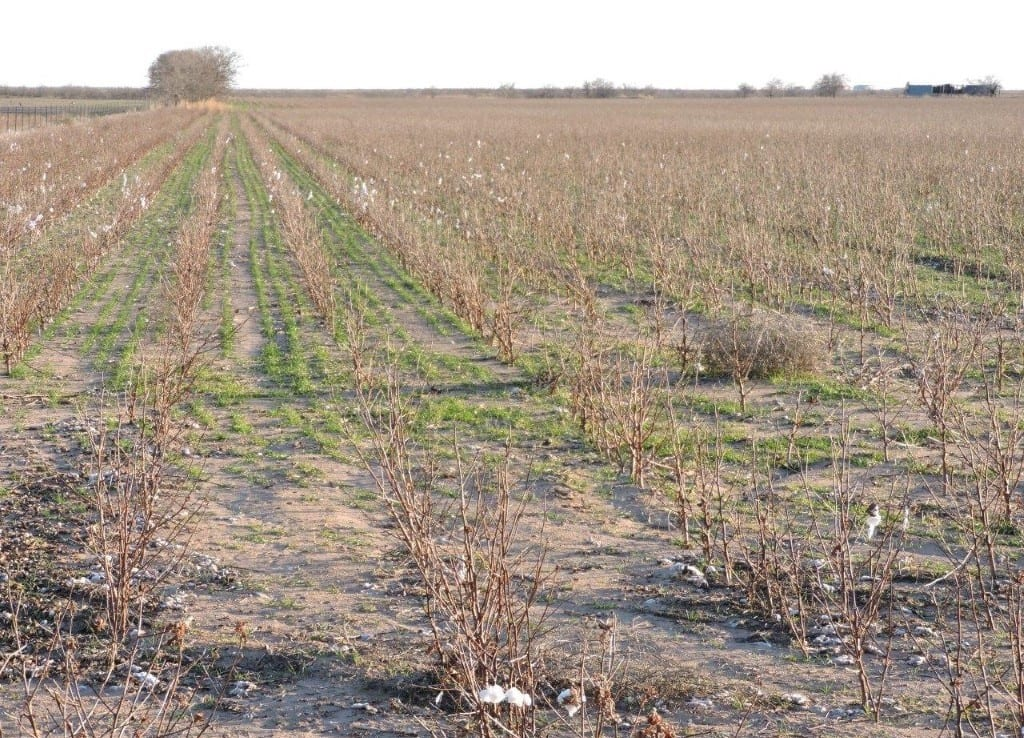 163 acres in Baylor County