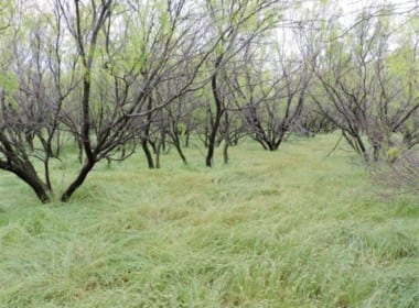 120 acres in Wilbarger County