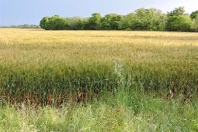 79 acres in Wichita County