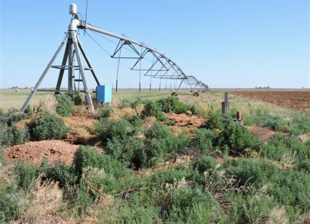 1,266 acres in Bailey County