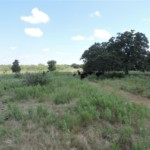 80 acres in Young County