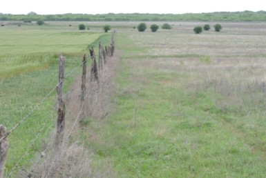 20 acres in Clay County
