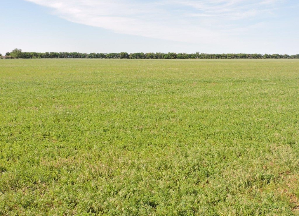 139 acres in Wilbarger County