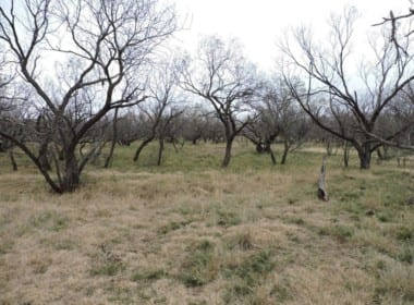 101 acres in Baylor County