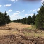 33 acres in Lamar County
