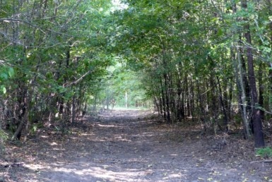 53 acres in Titus County