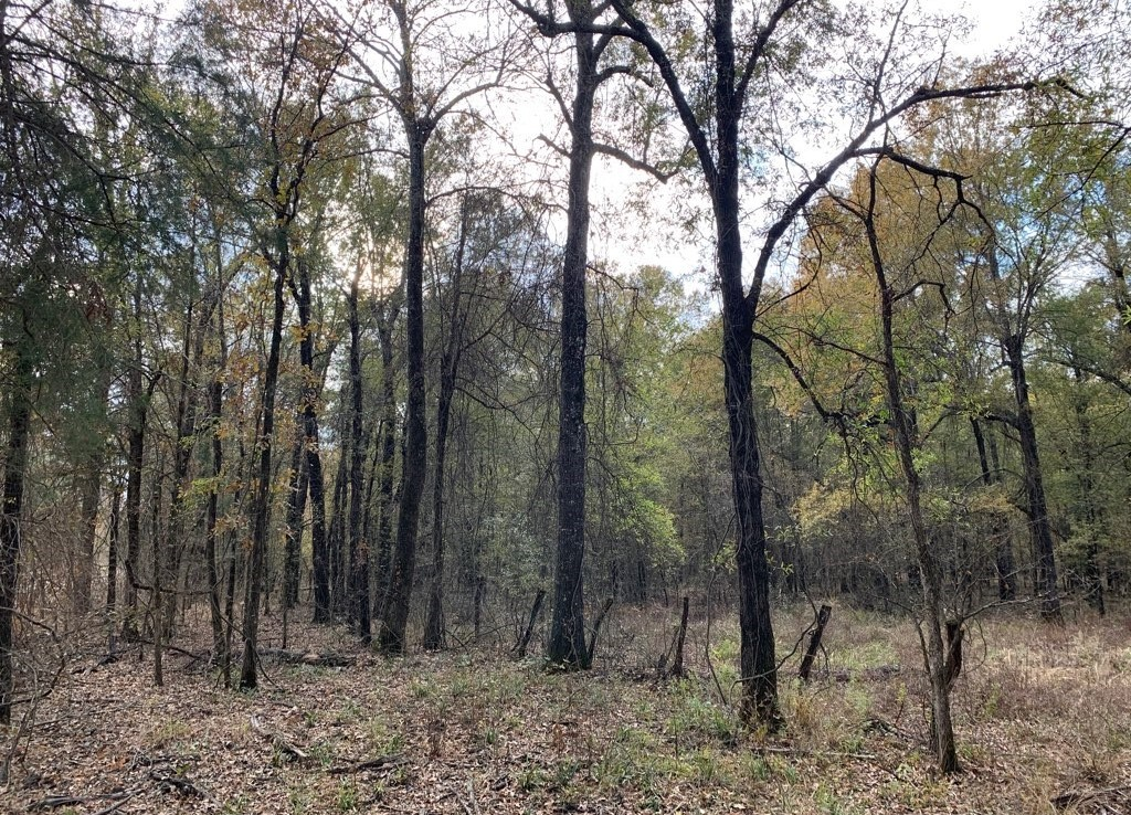 21 acres in Red River County
