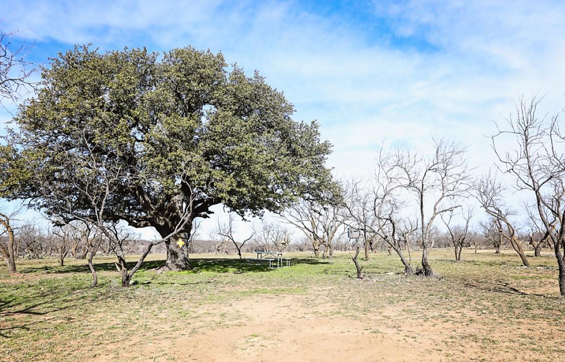 250 acres in Coleman County