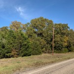 Homesite in Titus County