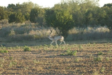 446 acres in Stonewall County