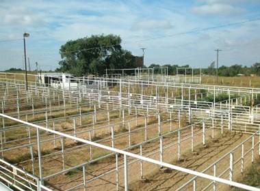 Vernon Livestock Auction