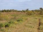 283 acres in Wichita County