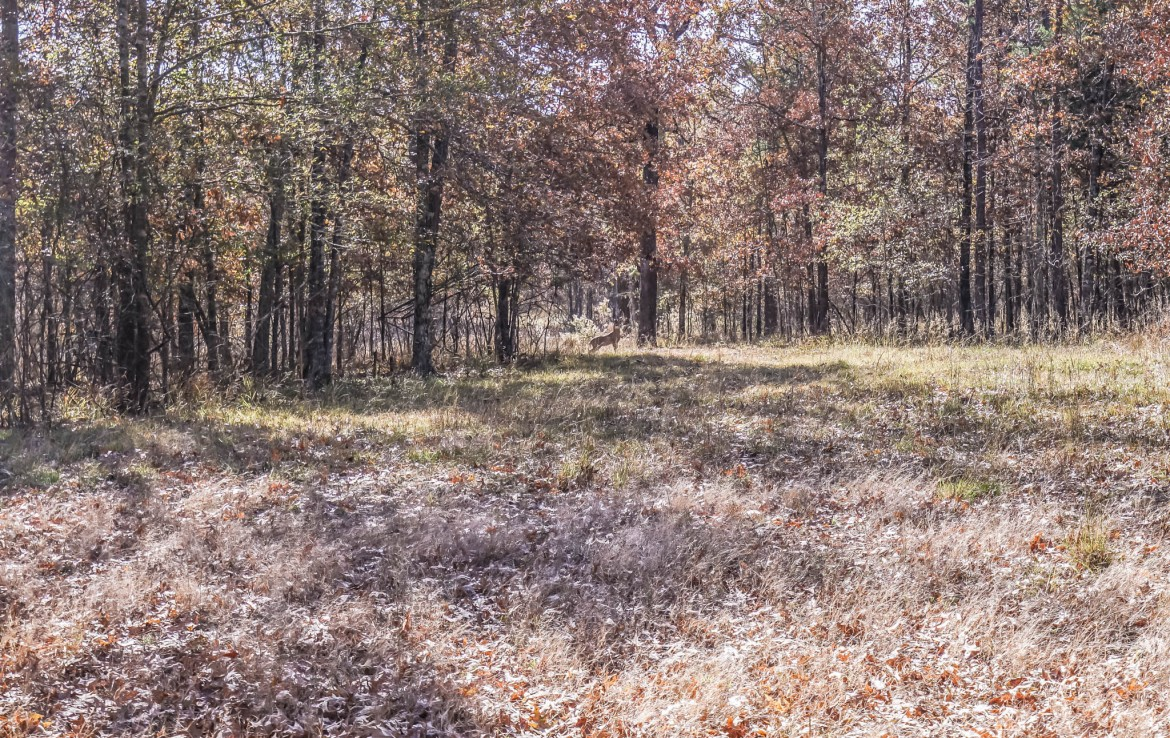 216 acres in Red River County