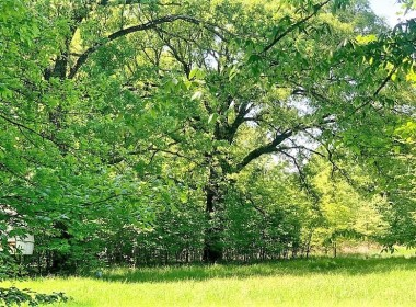 16 acres in Titus County