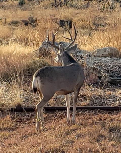 3,093 acres in Foard County