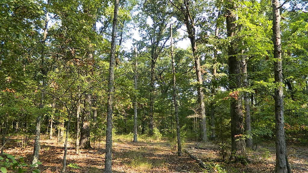 10 acres in Titus County
